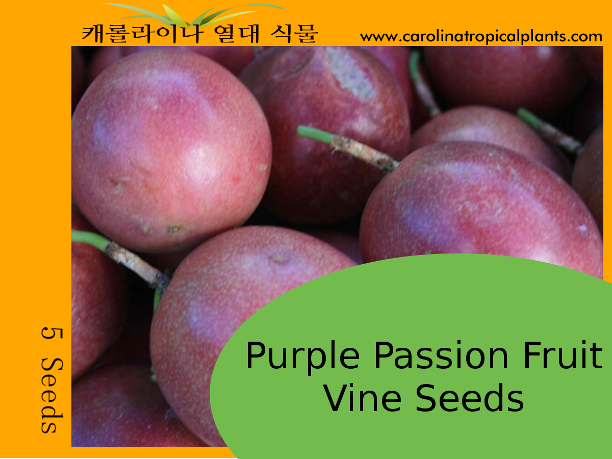 Topical Exotic Purple Passion Fruit Seeds - 5 Seed Count