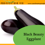 Eggplant Black Beauty Seeds - 25 Seed Count