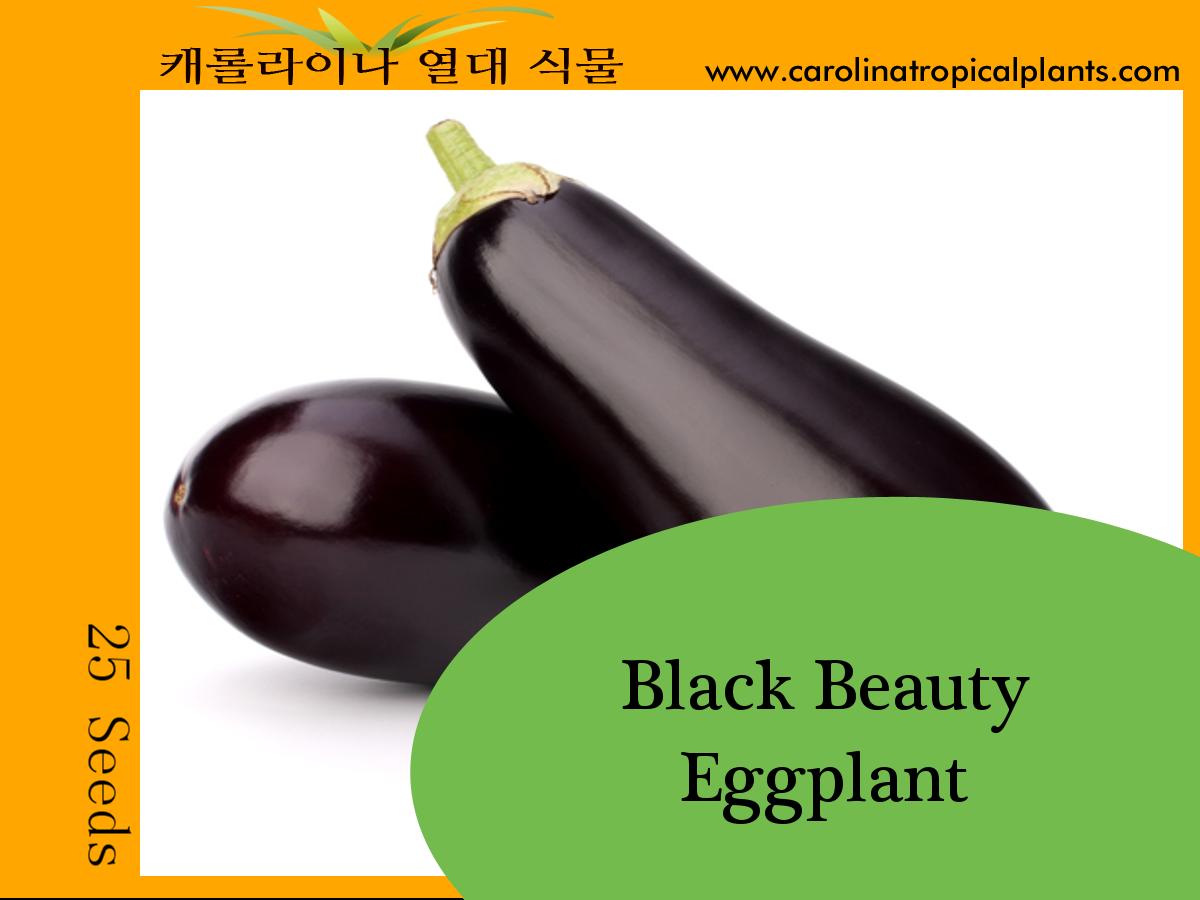Eggplant Black Beauty Seeds - 25 Seed Count