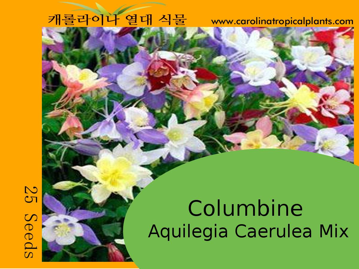 Columbine (Aquilegia Caerulea Mix) Seeds - 25 Seeds