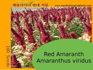 RED Amaranth - Amaranthus Viridus Seeds - 100 Seeds