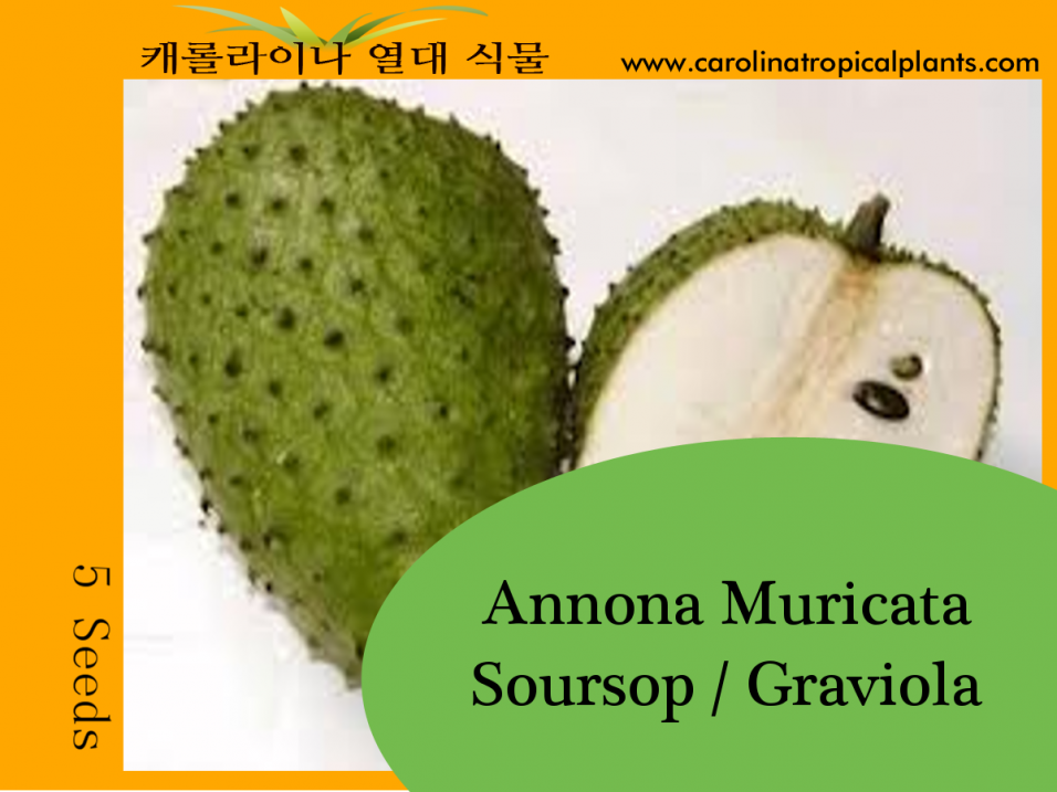 Soursop - Annona Muricata - 5 Seed Count