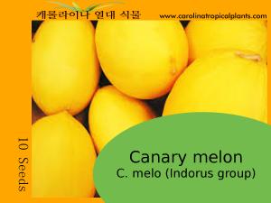 Canary melon - C. melo (Indorus group) Seeds - 10 Seeds