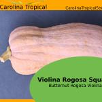"Violina Rogosa Squash - Butternut Rogosa Violina ""Gioia"" Squash - 25 Seed Count"