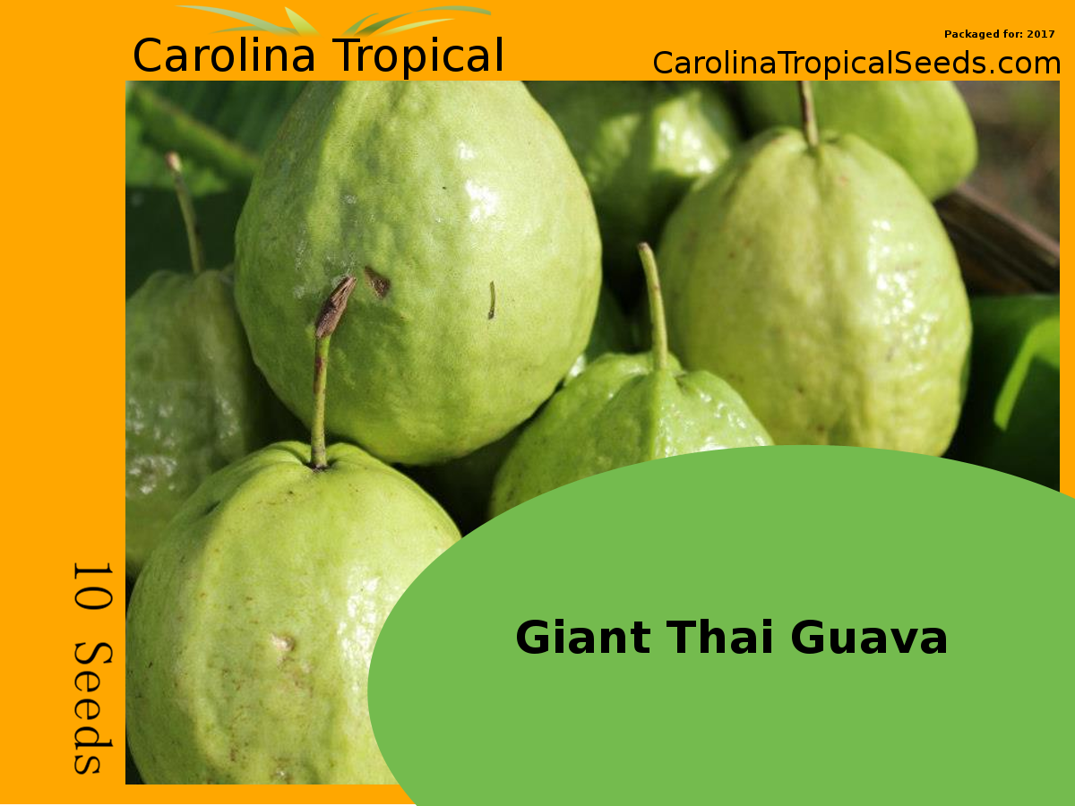 Germination information for Guava Seeds