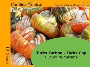 Turks Turban - Turks Cap - Cucurbita maxima - 10 Seed Count