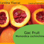 Gac Fruit - Momordica cochinchinensis seeds - 5 Seed Count