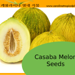 Casaba Melon Seeds - 10 Seeds