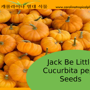 seed package - jack be little pumpkin seeds