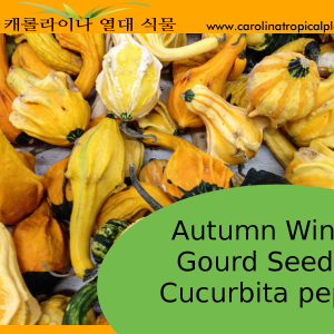 Autumn Wing Gourd Seeds