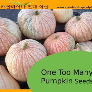 One Too Many Pumpkin Seeds F1 - 10 Seeds