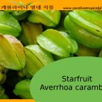 Carambola, starfruit, Averrhoa carambola seeds – 5 Seeds