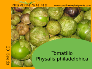 Tomatillo - Physalis philadelphica – 20 Seeds