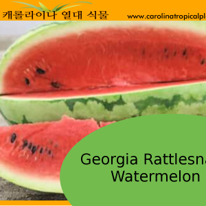 Georgia Rattlesnake Watermelon Seeds (Citrullus lanatus) – 20 Seeds