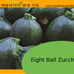 Black Round Eight Ball Zucchini – 10 Seeds