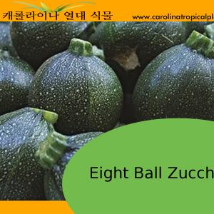 Black Round Eight Ball Zucchini – 10 Seeds