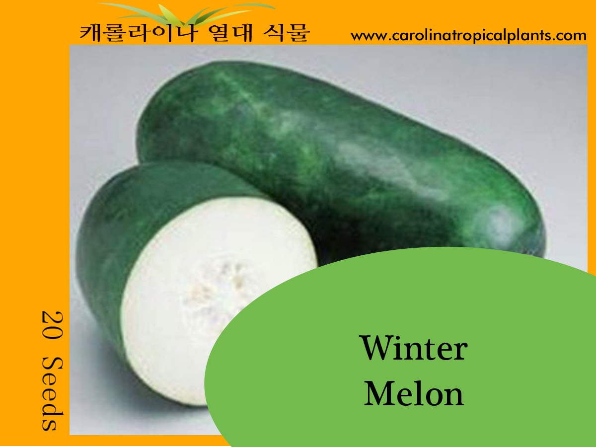 Growing Winter Melons From Seeds