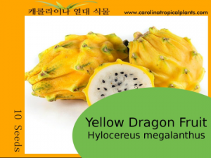 Dragon Fruit (Hylocereus megalanthus) (Yellow) Seeds - 10 Seed Count